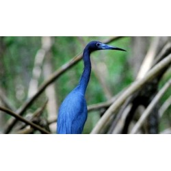 Caroni Bird Sanctuary Tour