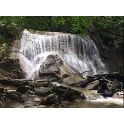 Turure Watersteps Falls